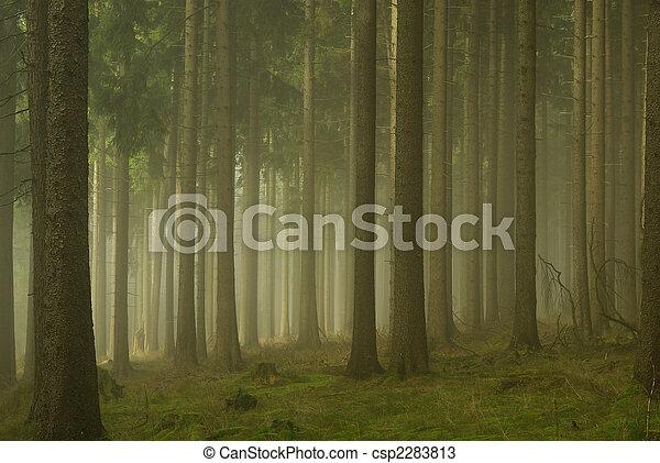 01, nebel, wald - csp2283813