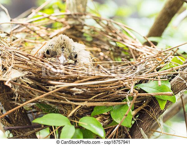 Babyvogel in einem Nest auf dem Baum. - csp18757941
