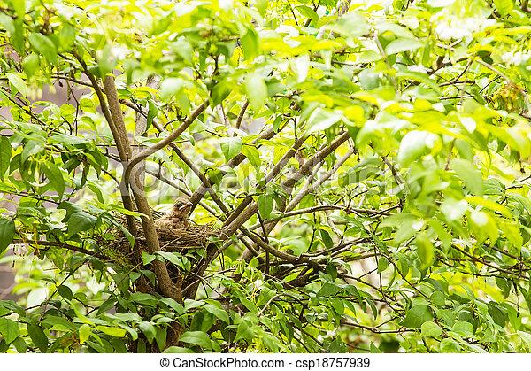 Babyvogel in einem Nest auf dem Baum. - csp18757939