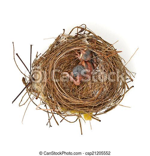 Babyvogel in einem Nest. - csp21205552
