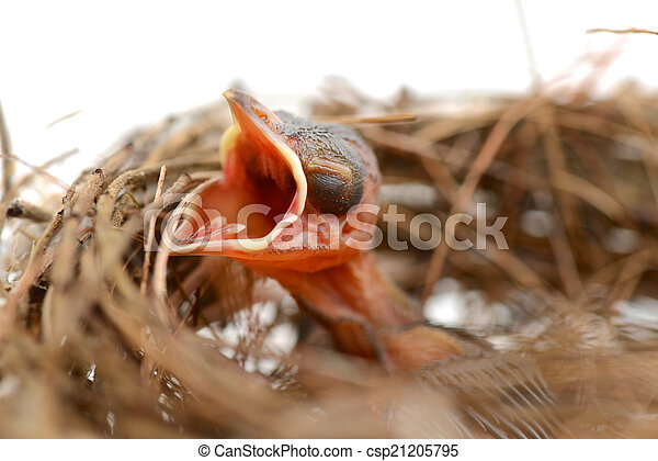 Babyvogel in einem Nest. - csp21205795