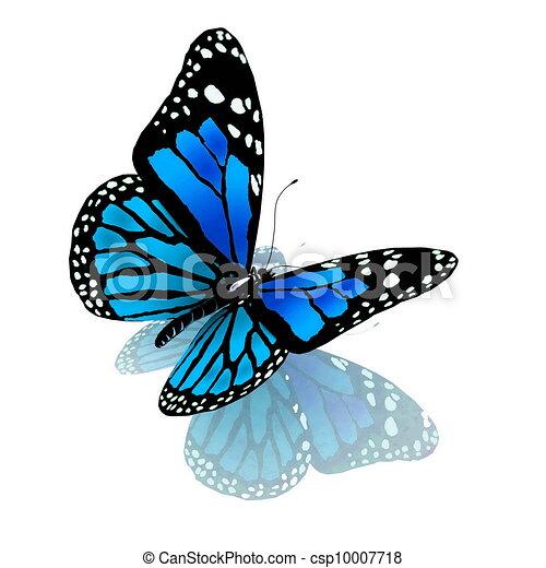 Schmetterling blauer Farbe auf einem weißen - csp10007718