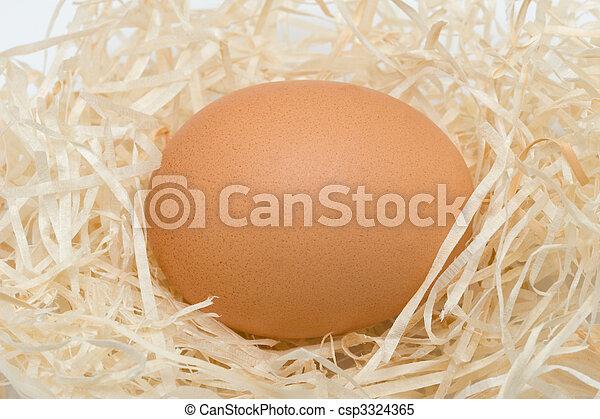 Ei in einem Nest - csp3324365