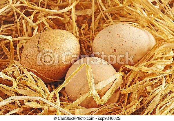Ei in einem Nest - csp9346025