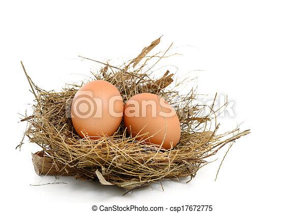 Eier in einem Nest. - csp17672775