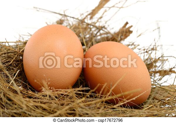 Eier in einem Nest. - csp17672796