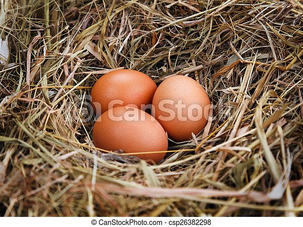 Eier in einem Nest. - csp26382298