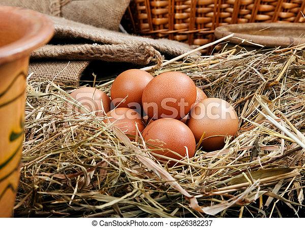 Eier in einem Nest. - csp26382237