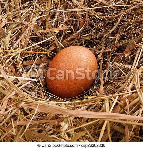 Eier in einem Nest. - csp26382338