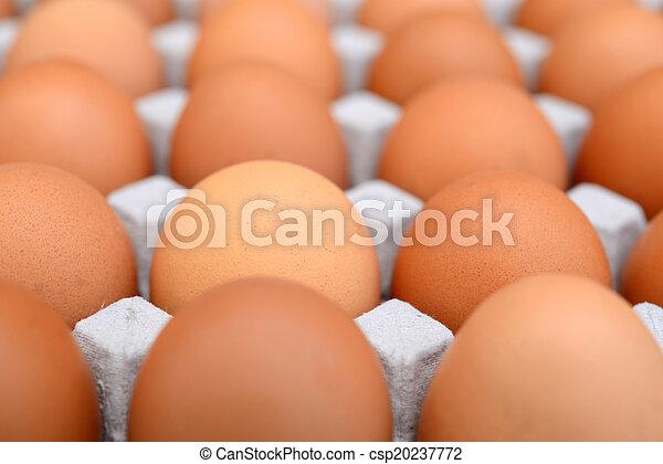 Eier in einer Schachtel. - csp20237772