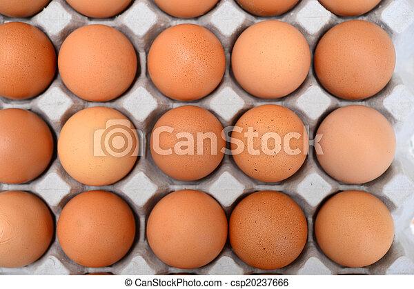 Eier in einer Schachtel. - csp20237666