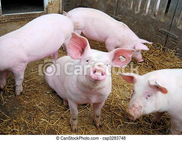 Ein kleines Schwein - csp3283748