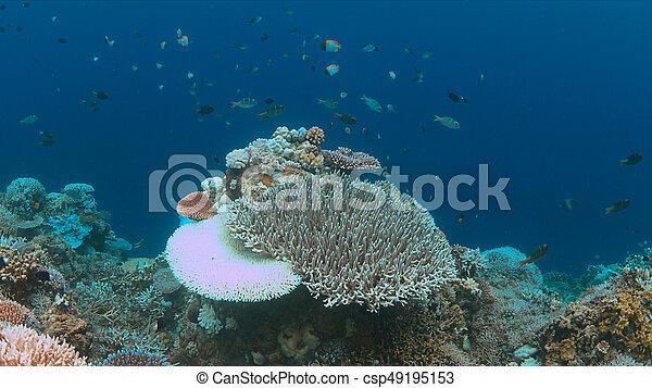 Ein Korallenriff stirbt. - csp49195153