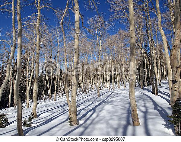 espe, winter - csp8295007
