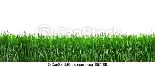 Gras - csp1097108