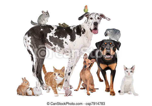 Haustiere vor weißem Hintergrund - csp7914783