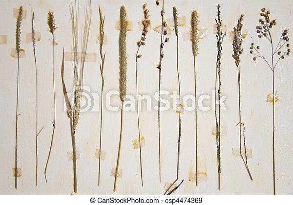Herbarium - csp4474369