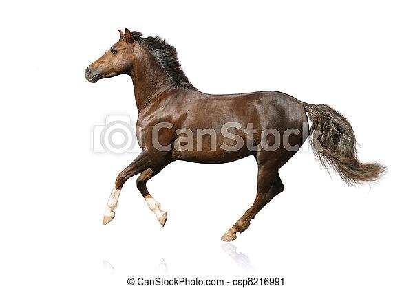 Pferd isoliert - csp8216991