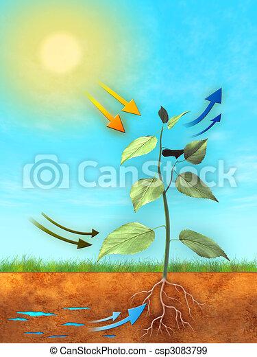 photosynthese - csp3083799