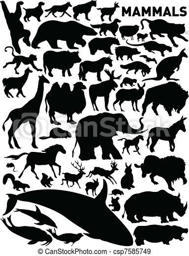 Säugetiere - csp7585749