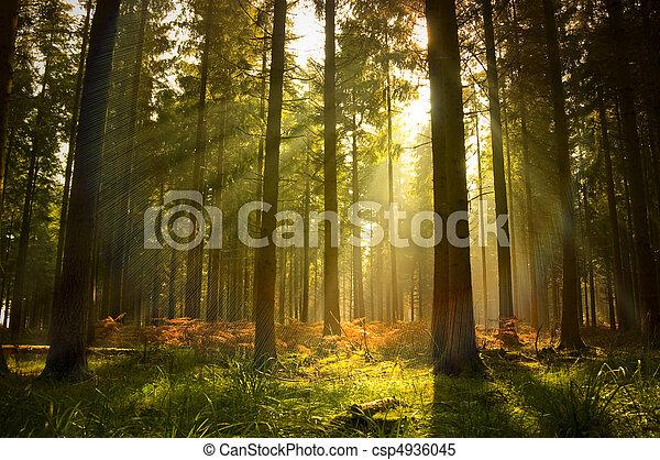 Wunderschöner Wald - csp4936045