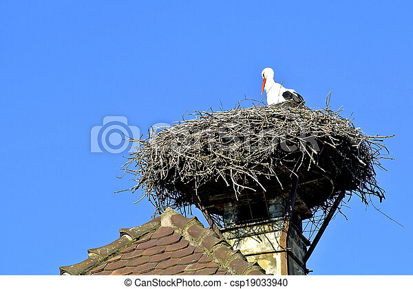 Storch in einem Nest. - csp19033940