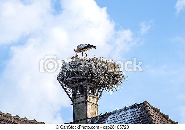 Storch in einem Nest. - csp28105720