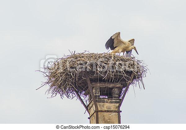 Storch in einem Nest - csp15076294