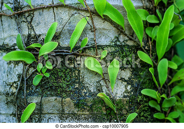 Geldpflanzen wachsen - csp10007905