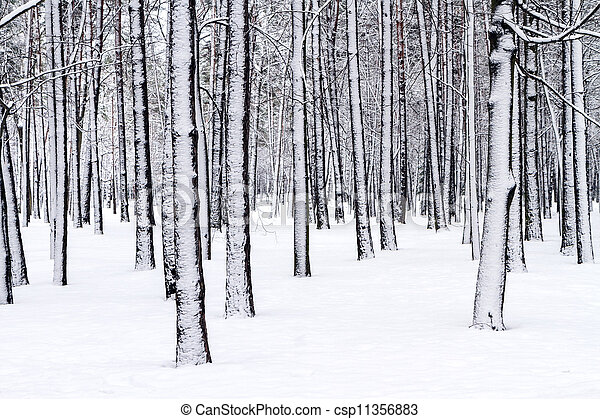 Winterwunderland - csp11356883