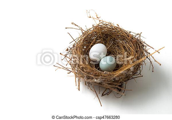 Zwei Eier im Vogelnest. - csp47663280